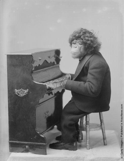mono músico